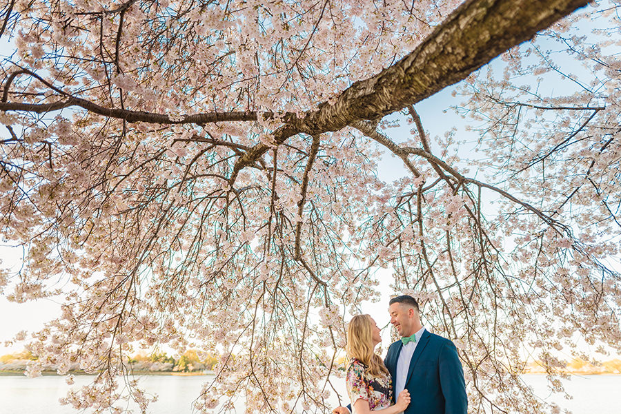 warm colorful engagement photos of sweet stylish couple at the cherry blossoms in Washington DC